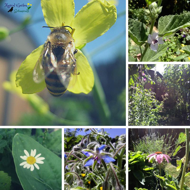 Magical Garden flowers and honeybee
