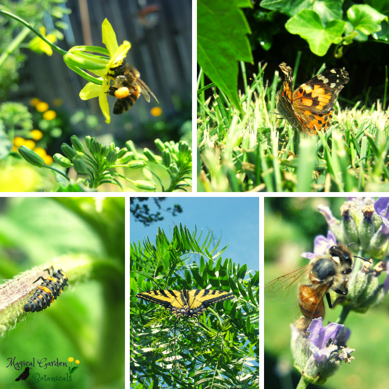 Magical Garden visitors